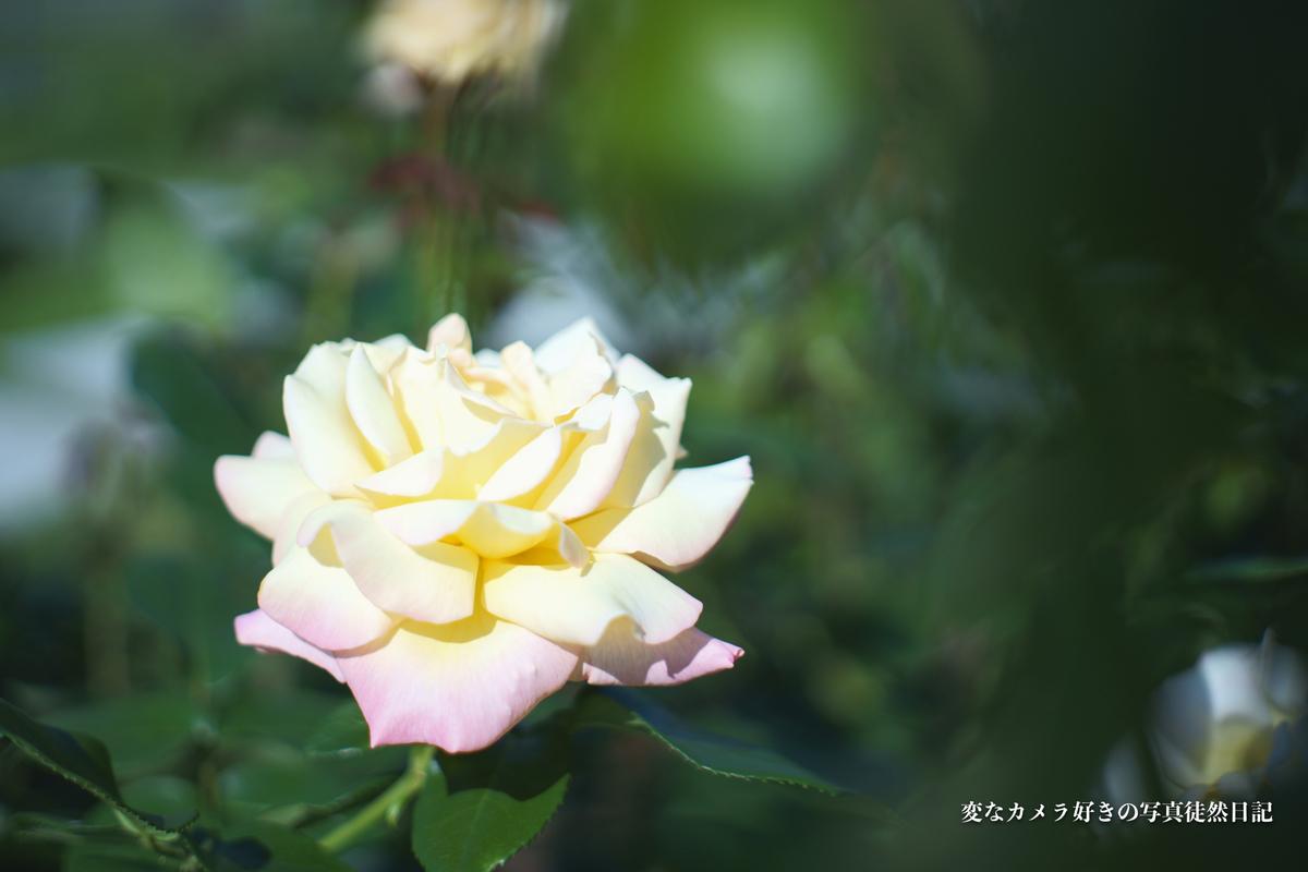f:id:yuseiphotos:20210604003219j:plain