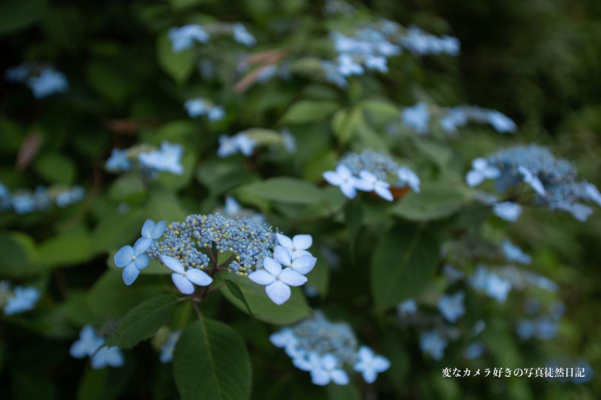 f:id:yuseiphotos:20210609022050j:plain