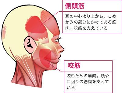 """体の中で一番使用している筋肉とは? - 笑顔を """"Reproduce"""""""