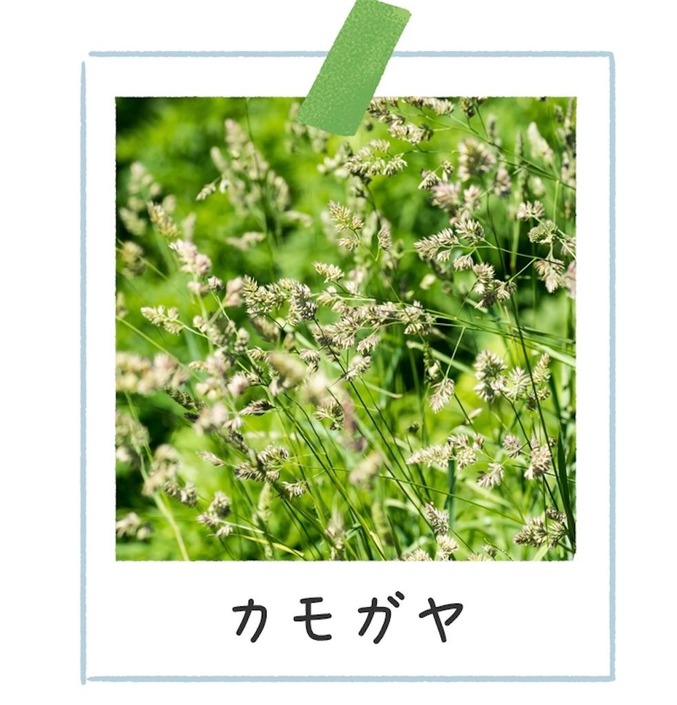 f:id:yushunchi:20200525051924j:image