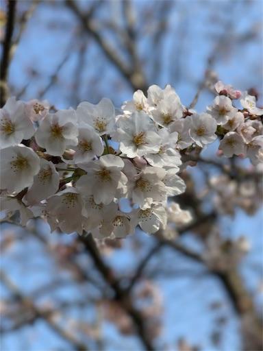f:id:yusuke_tomura:20170421154124j:image