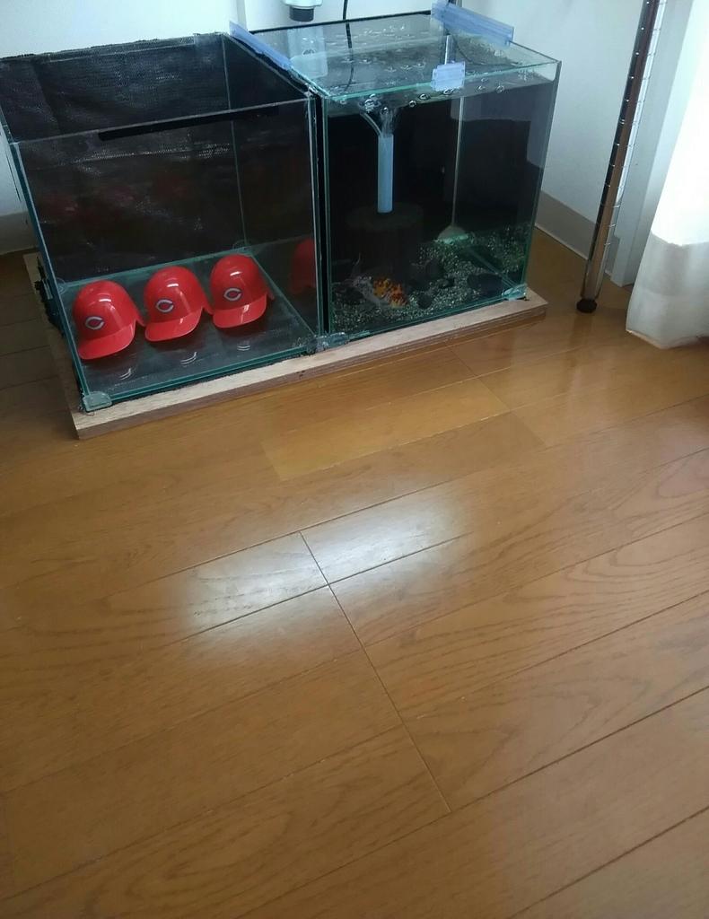 f:id:yutakakingyo:20180906113908j:plain