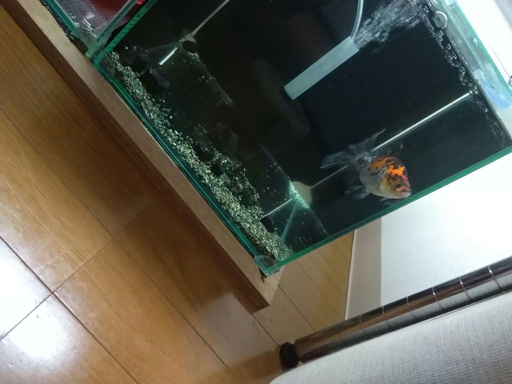 f:id:yutakakingyo:20180911125541j:plain