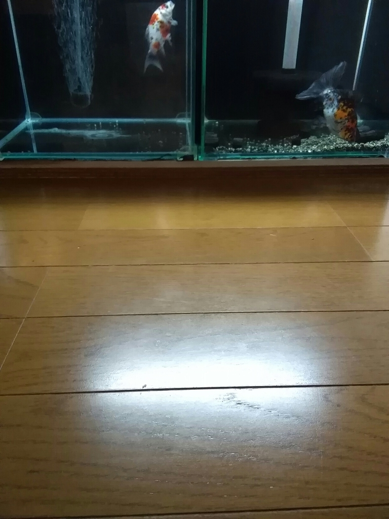 f:id:yutakakingyo:20180921175802j:plain