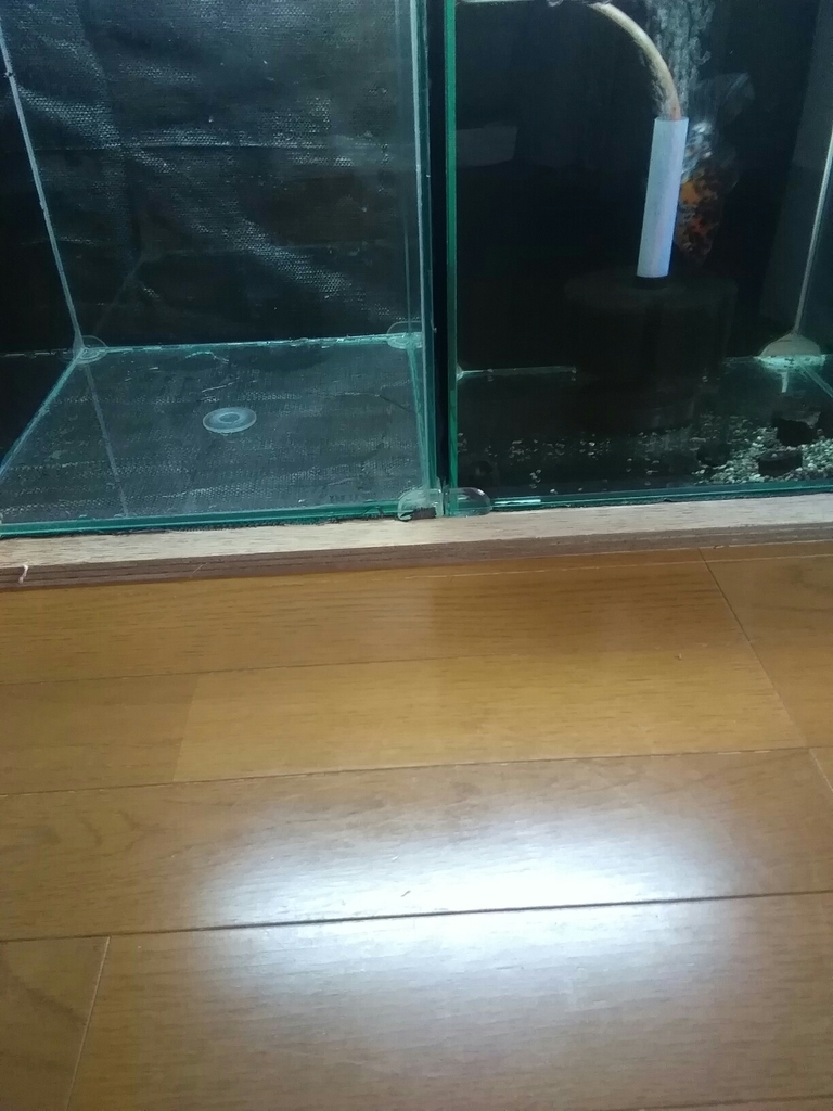 f:id:yutakakingyo:20180926130537j:plain