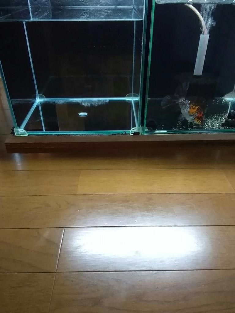 f:id:yutakakingyo:20180926171536j:plain