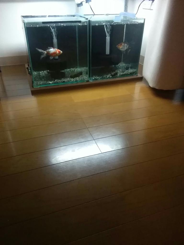 f:id:yutakakingyo:20181014191708j:plain