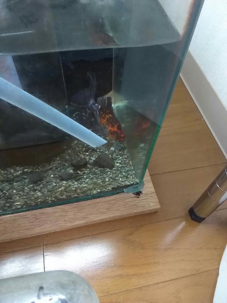 f:id:yutakakingyo:20181023122613j:plain