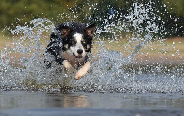 走ってる犬の写真