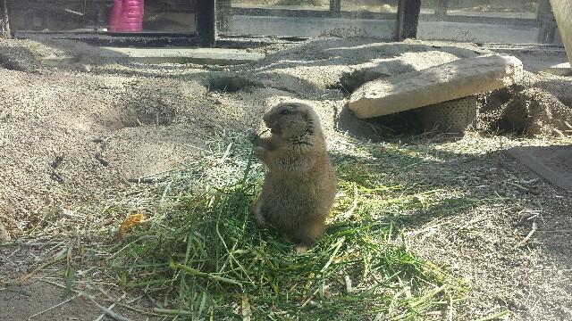 東山動植物園 動物の写真