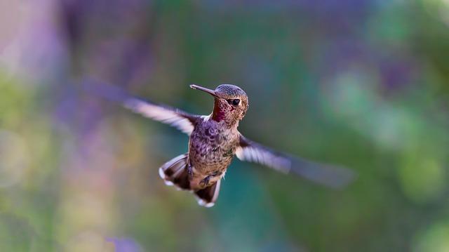 飛び回る鳥の写真