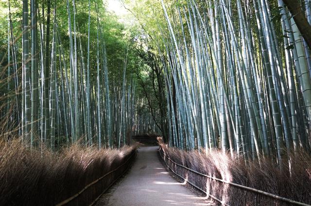 嵐山 竹林 バンブーフォレスト