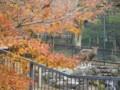 京都市動物園・ニホンカモシカ