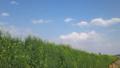 [風景][景色]野原と青空