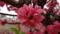 鮮やかな梅の花