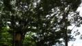 [風景]木々