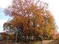 [風景][季節]森の木々