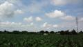 [風景][そら]青空な田んぼ