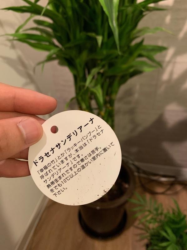 f:id:yutochiba:20190902000433j:plain