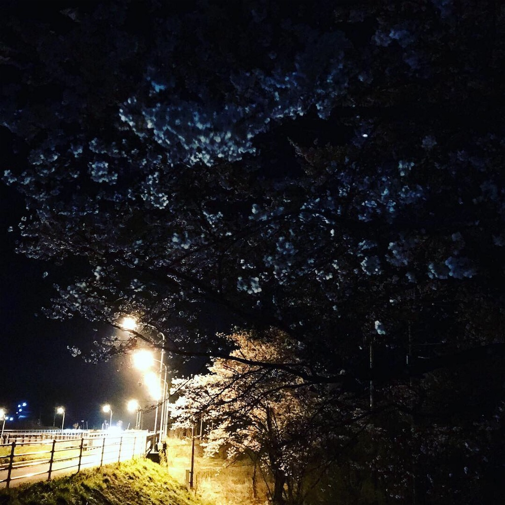 f:id:yutoma233:20190424201341j:image