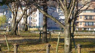 f:id:yutonyan:20121220093133j:image