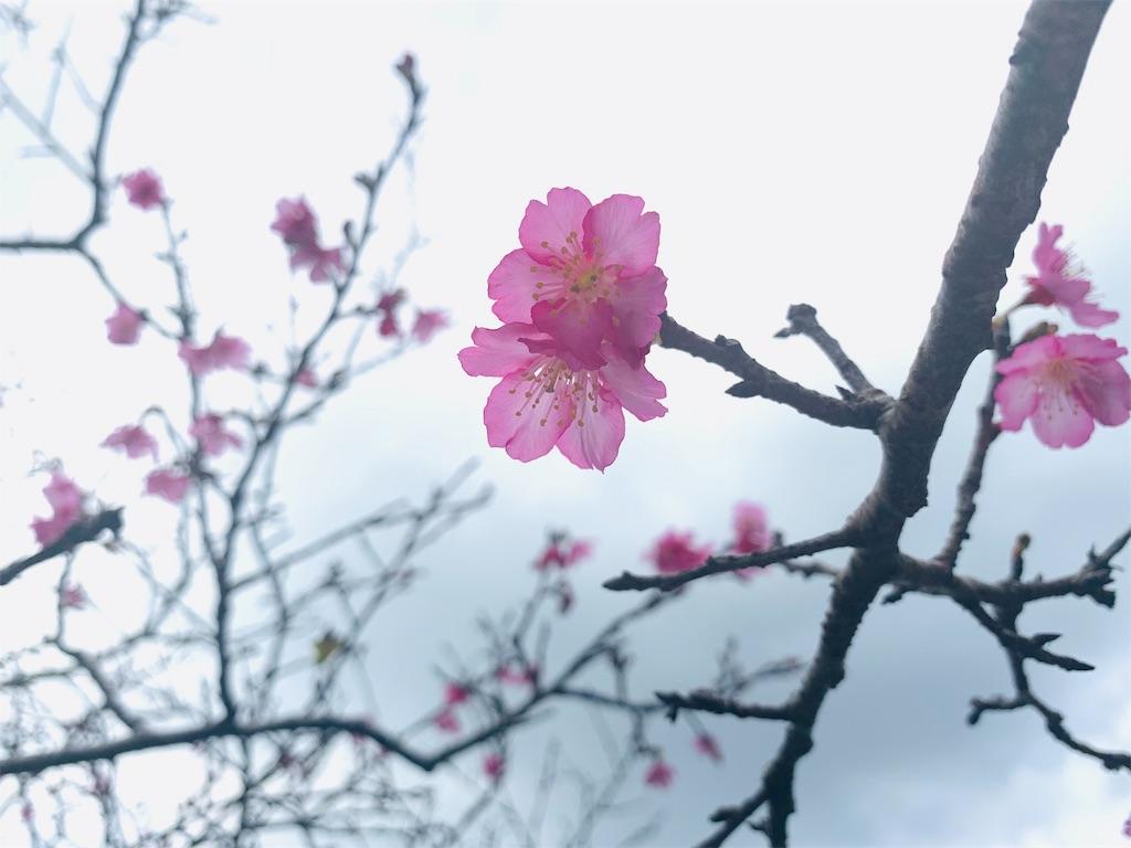 f:id:yutorilife276:20190129170924j:image