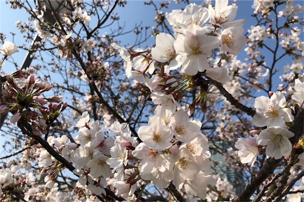 f:id:yutosato23:20200407221935j:image