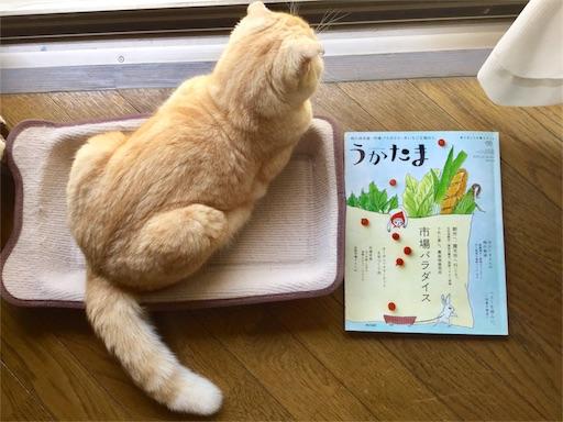 f:id:yutosuna:20170611070517j:image