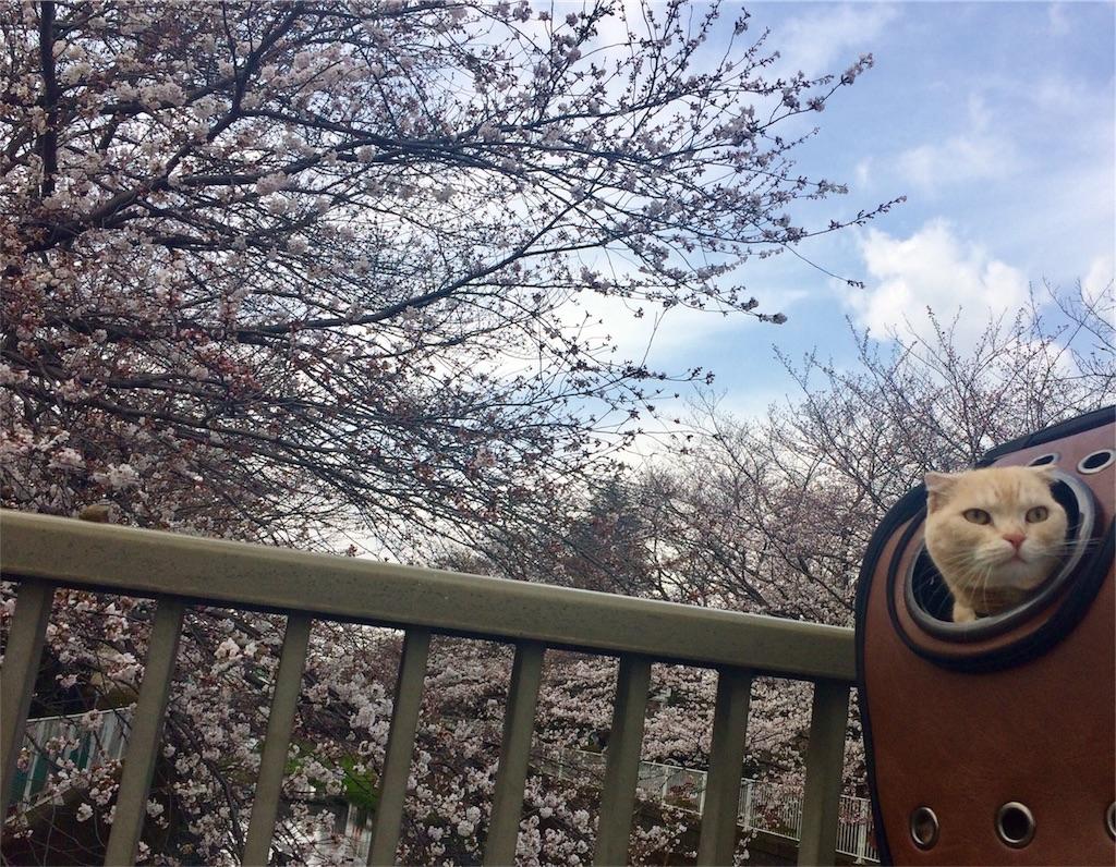f:id:yutosuna:20180329170617j:image