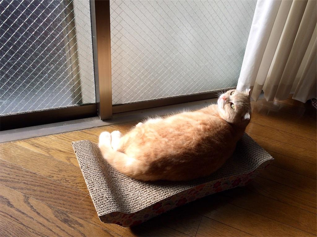 f:id:yutosuna:20181105063729j:image