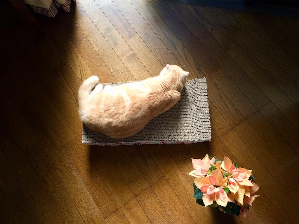 f:id:yutosuna:20190111111955j:image