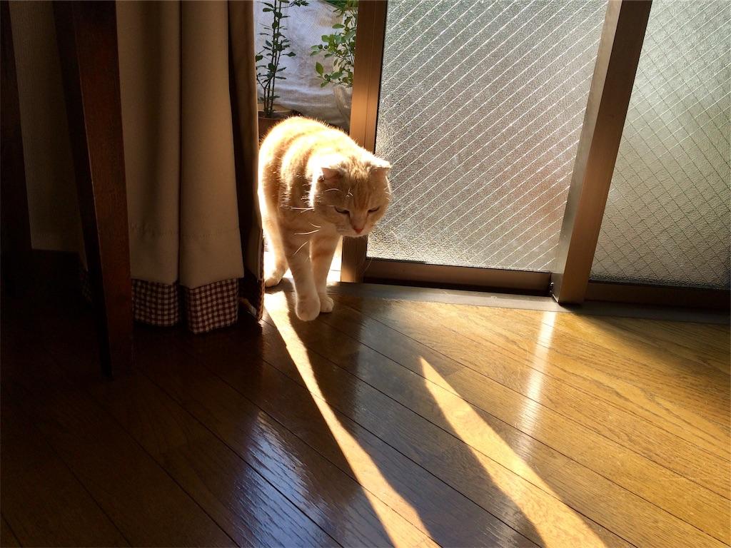f:id:yutosuna:20190118070600j:image