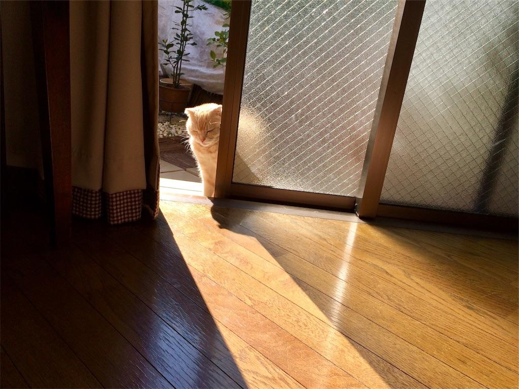 f:id:yutosuna:20190118070605j:image