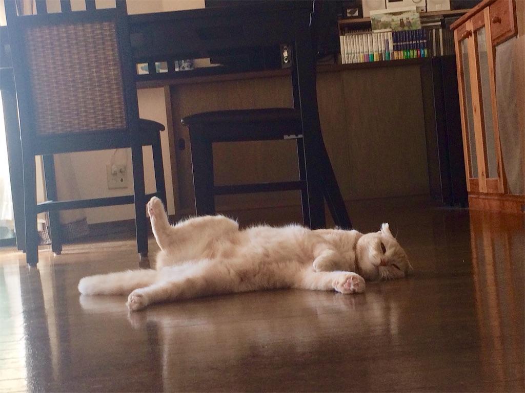 f:id:yutosuna:20190315063641j:image