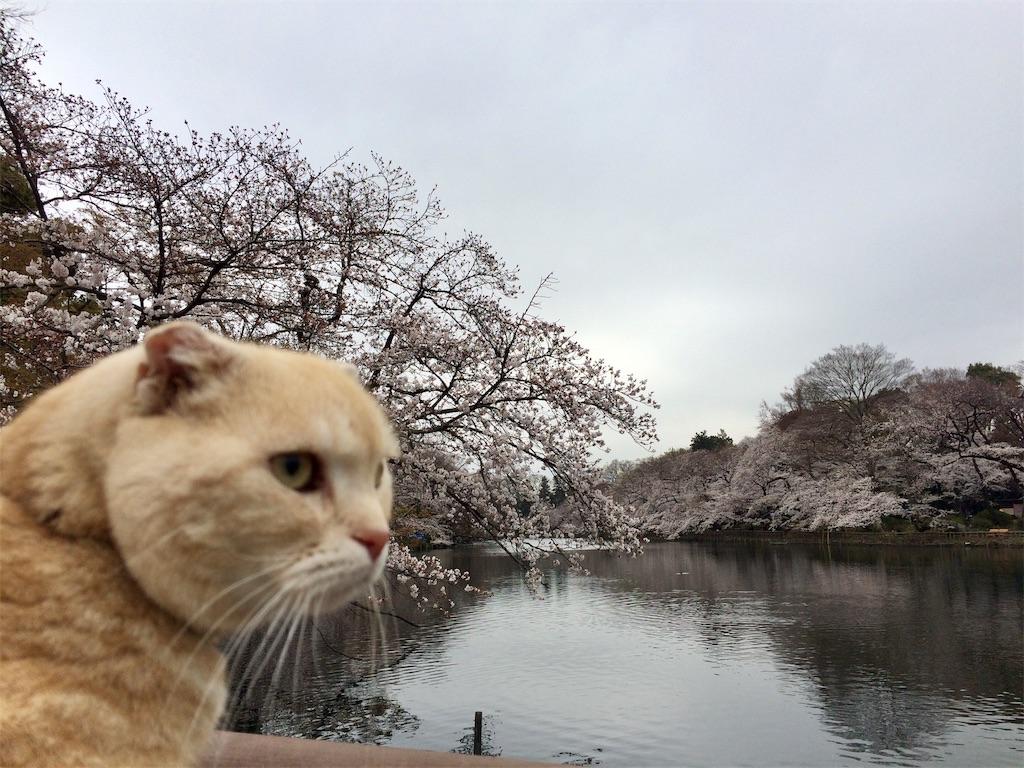 f:id:yutosuna:20190401170335j:image