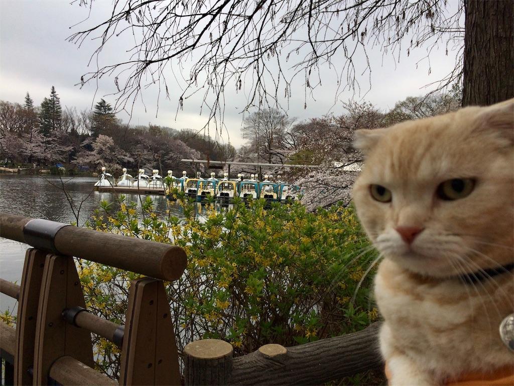 f:id:yutosuna:20190401170346j:image