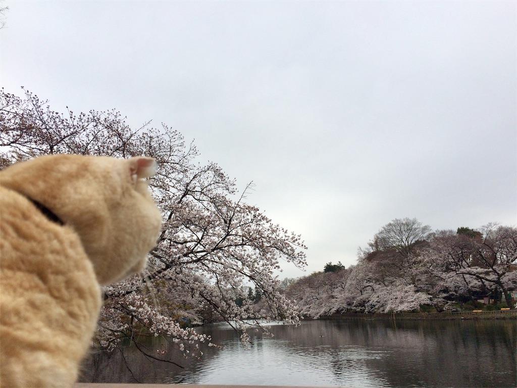 f:id:yutosuna:20190401170352j:image