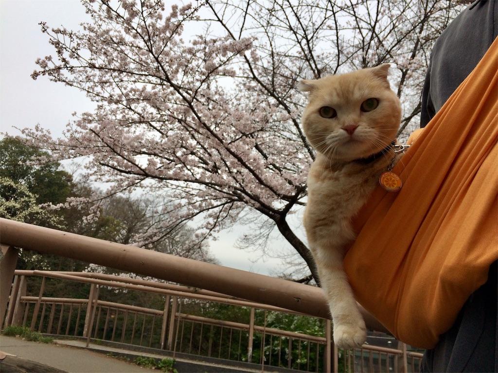 f:id:yutosuna:20190401171056j:image