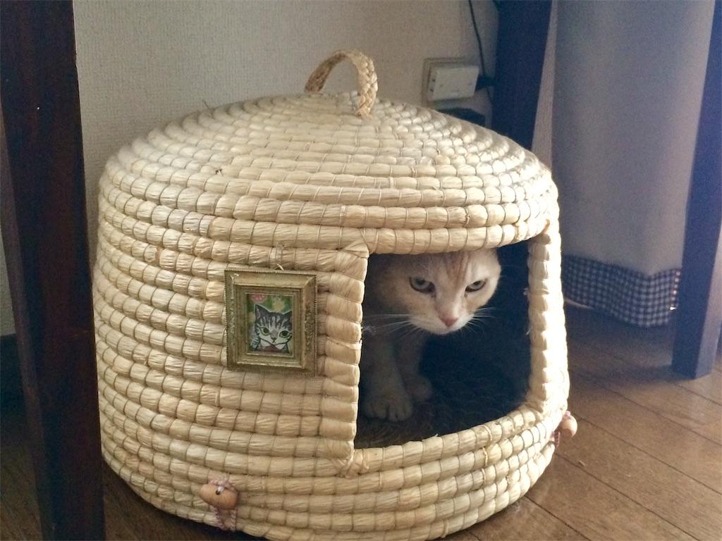 f:id:yutosuna:20190905124934j:image