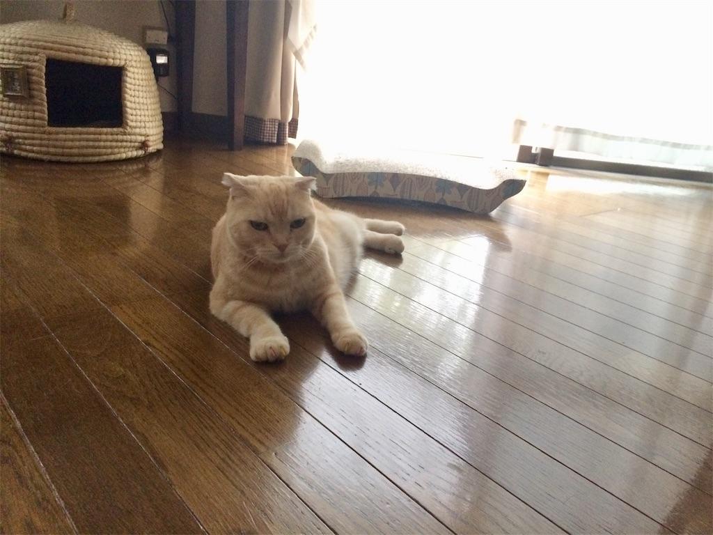 f:id:yutosuna:20191007064627j:image