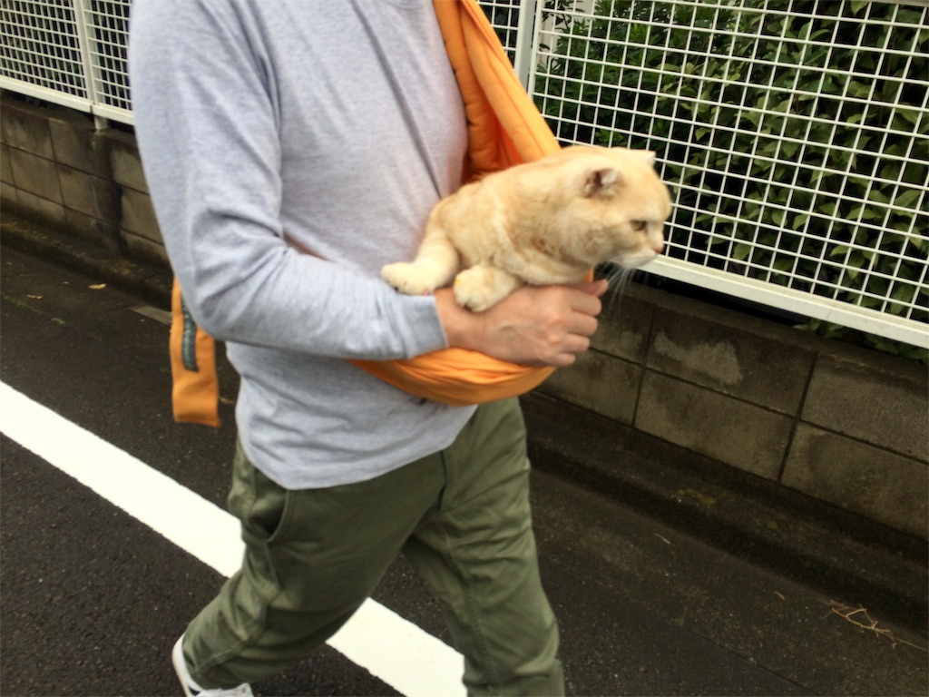 f:id:yutosuna:20191028075007j:image