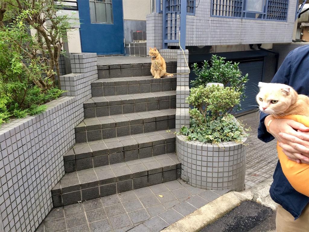f:id:yutosuna:20191028075757j:image