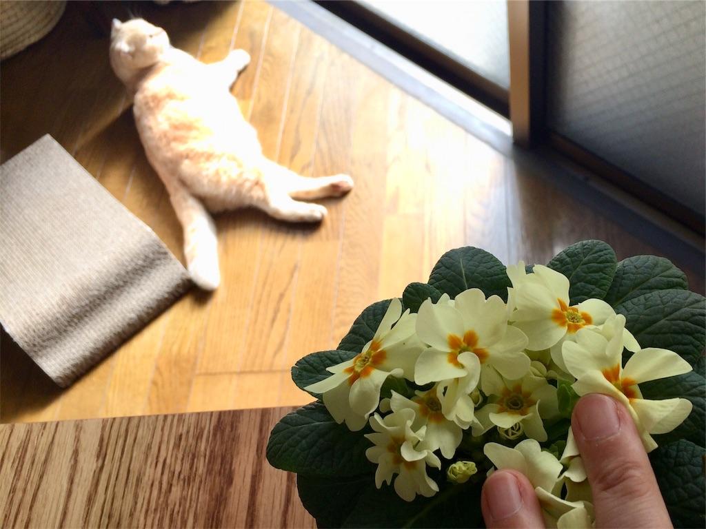 f:id:yutosuna:20200205093259j:image