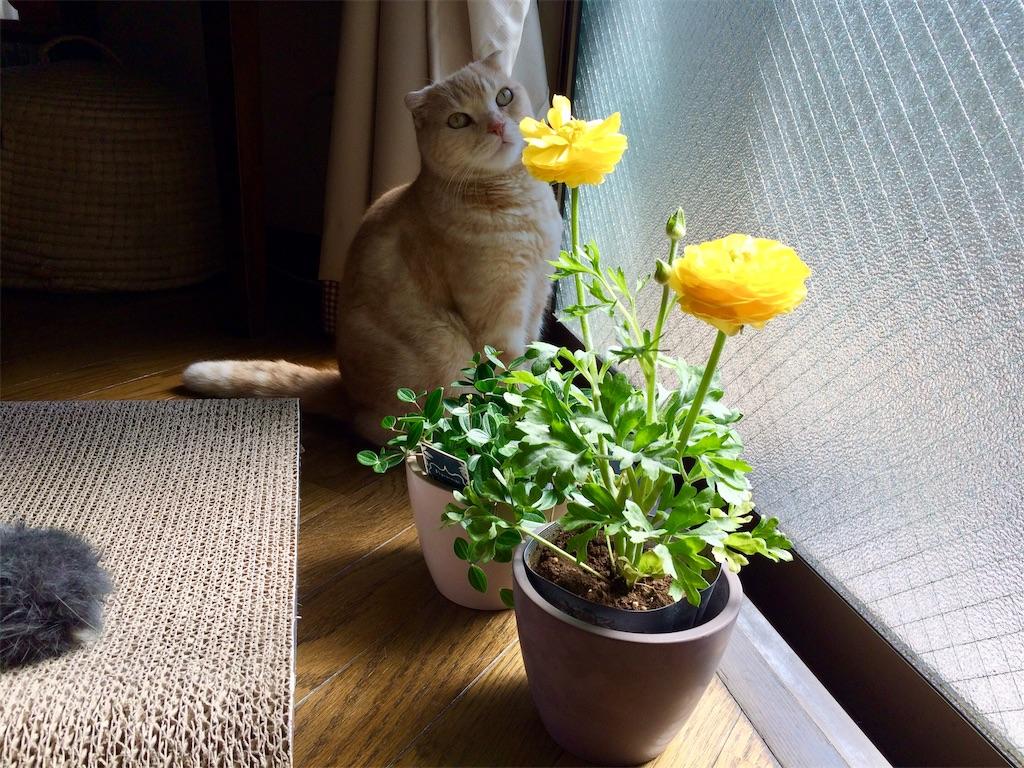 f:id:yutosuna:20200318114205j:image