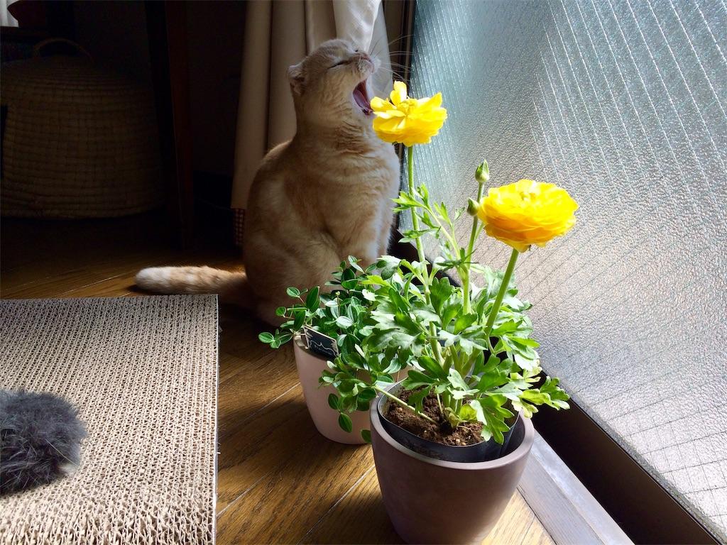 f:id:yutosuna:20200318114210j:image