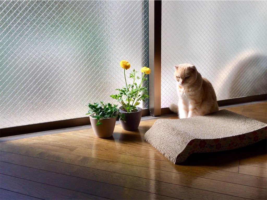 f:id:yutosuna:20200318114220j:image