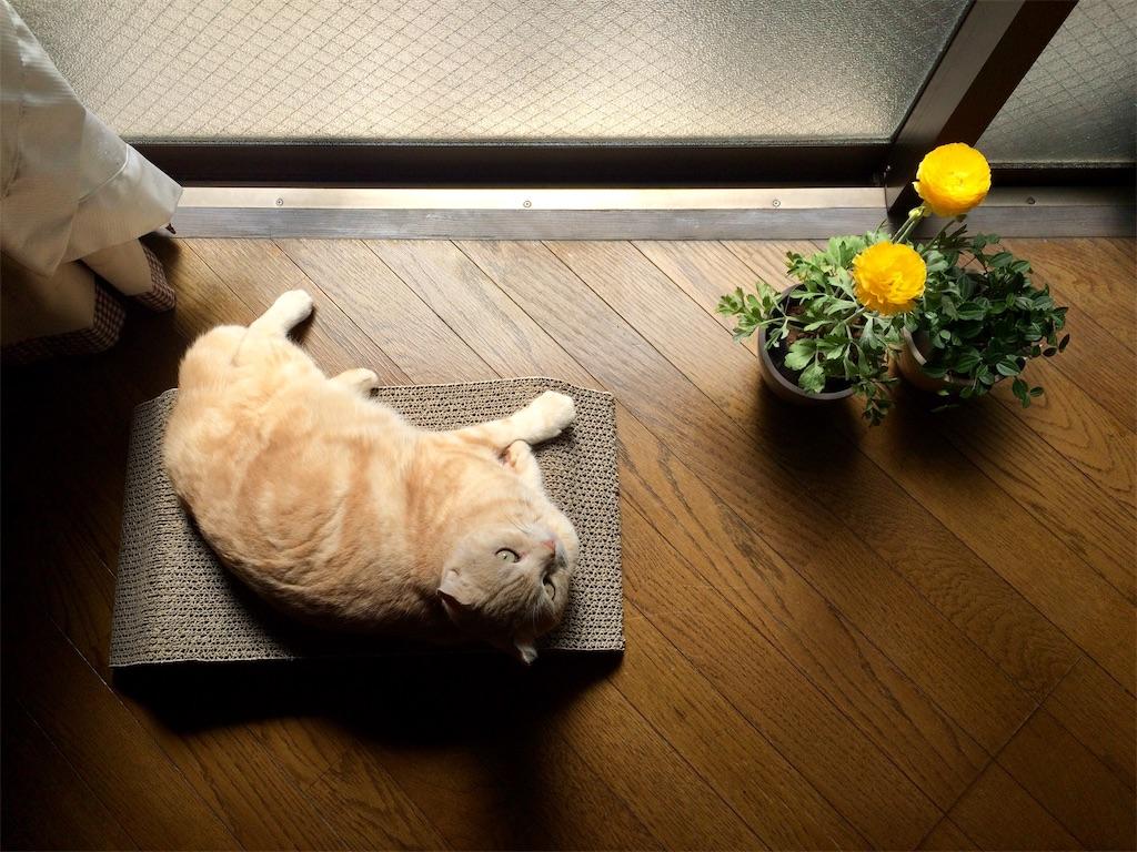 f:id:yutosuna:20200325070351j:image