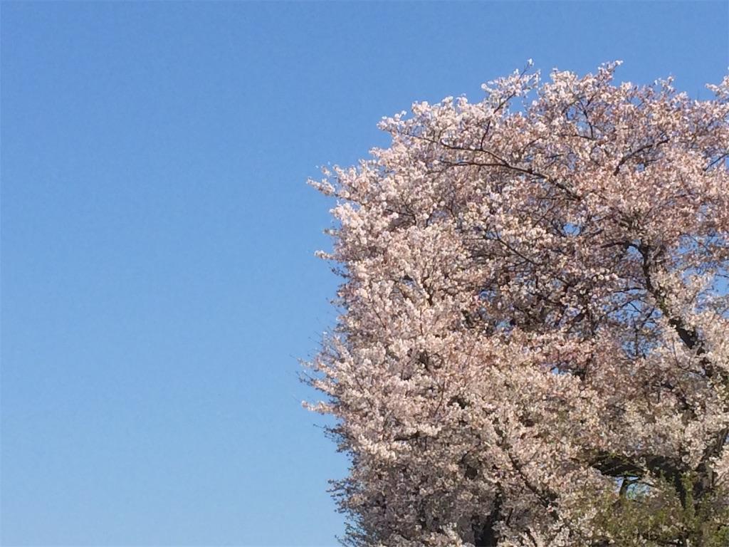 f:id:yutosuna:20200406063254j:image
