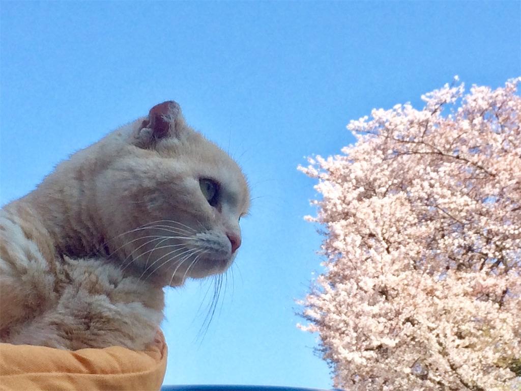 f:id:yutosuna:20200406063302j:image