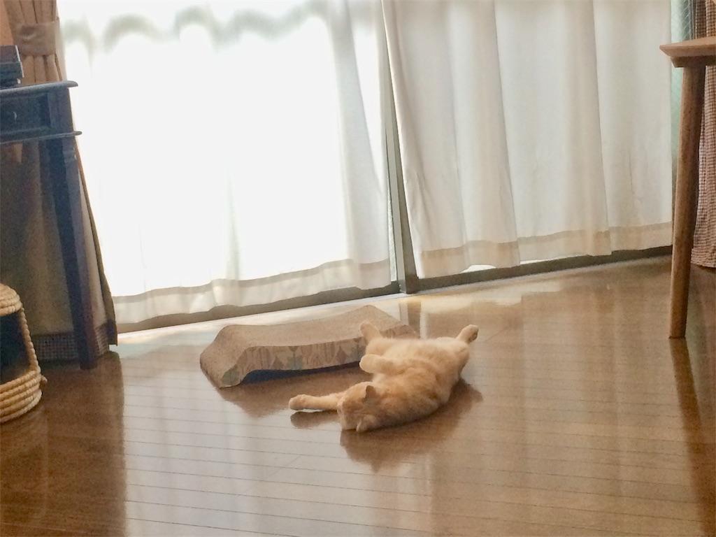 f:id:yutosuna:20200731073851j:image